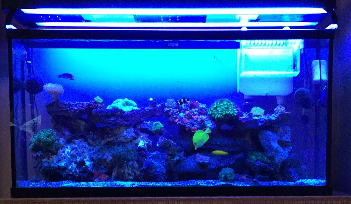 65 gallon reef tank | REEF2REEF Saltwater and Reef Aquarium