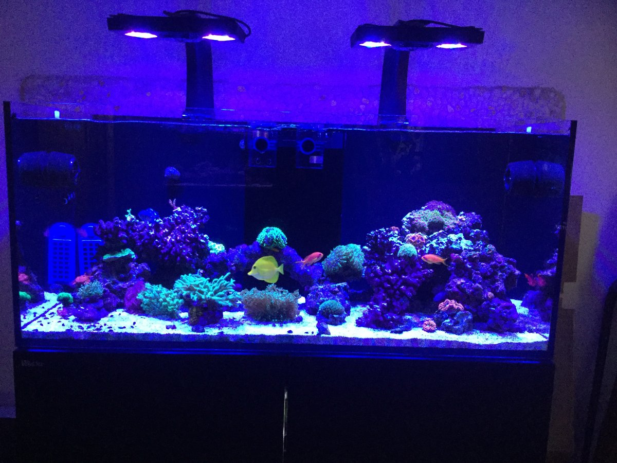 Show Off And Discuss Your Red Sea Reefer Series Page 41