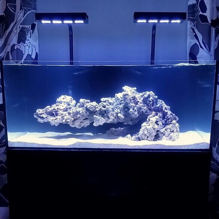REEF2REEF Saltwater And Reef Aquarium Forum