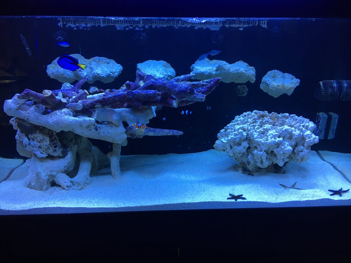 Aquascaping With Different Types Of Rock Reef2reef Saltwater And Reef Aquarium Forum