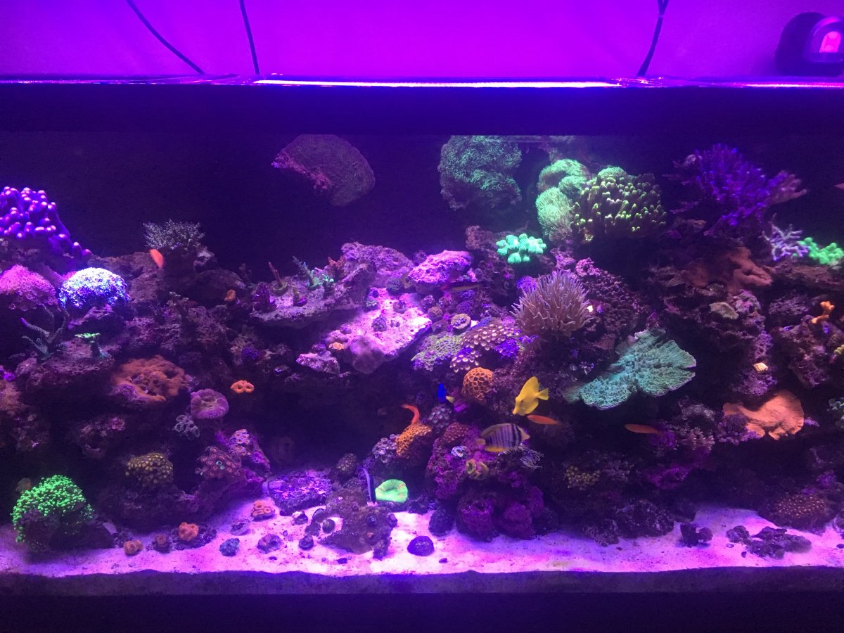 Black Box Led Sps Tank Where Is The Success Page 3