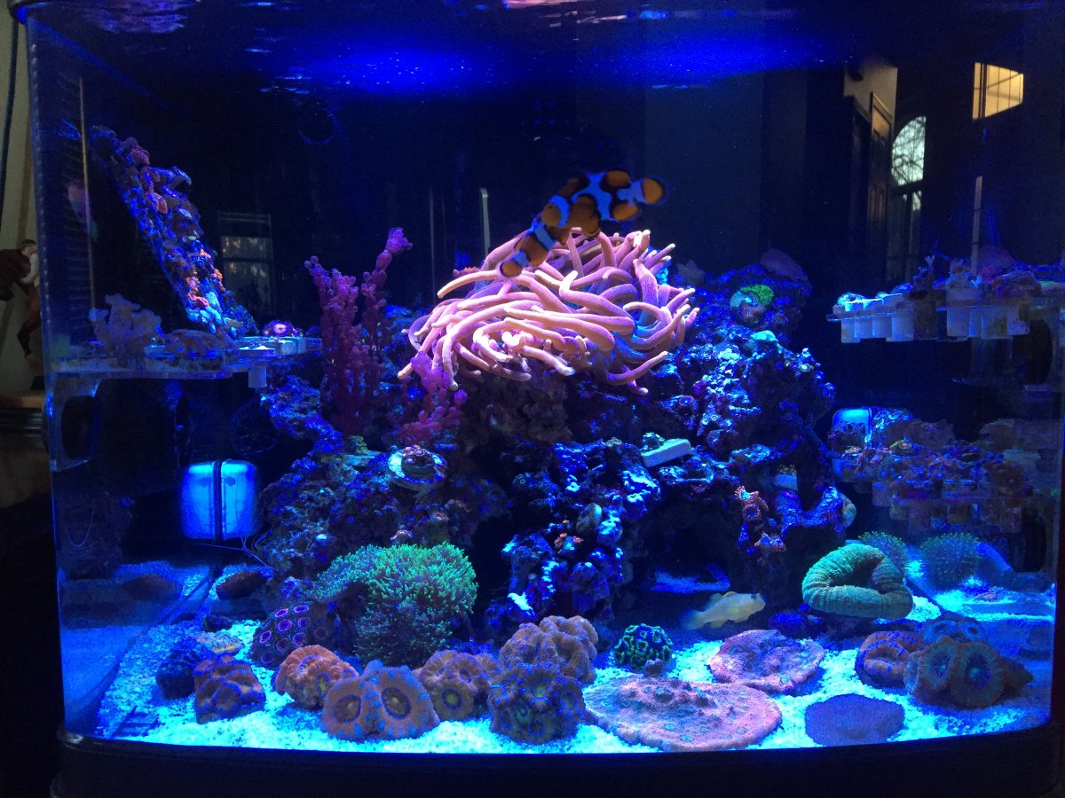 November discount thread your tank will be thankful for Discount aquarium fish and reef