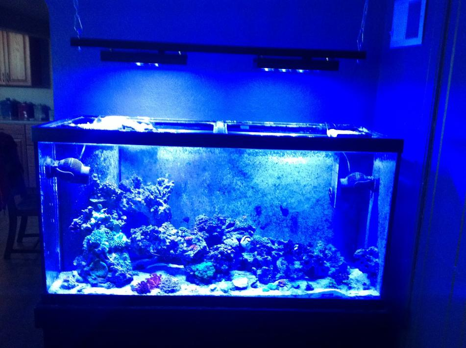 Hanging Mounting Ai Hydra S Reef2reef Saltwater And Reef