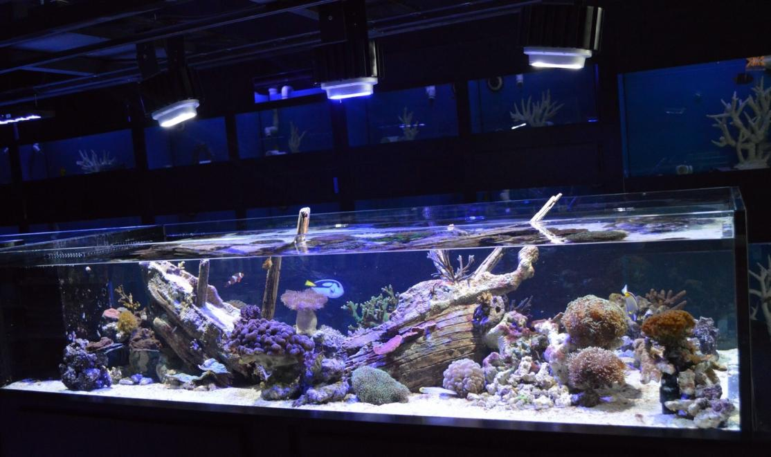 Daniel Nestorio 300gal Live Reef Sunken Ship Reef2reef