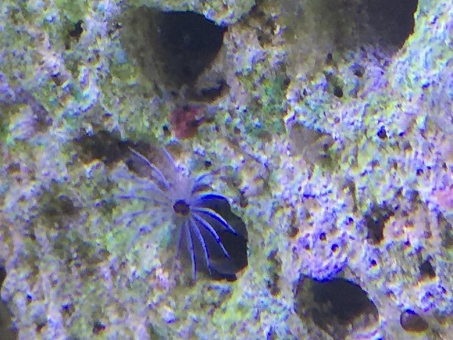 Feather Duster Worm Baby Will my feather...