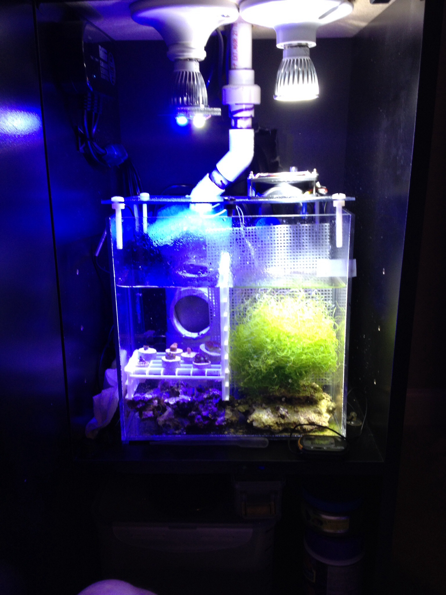 Marc The Shark S Nano Tube Reef2reef Saltwater And