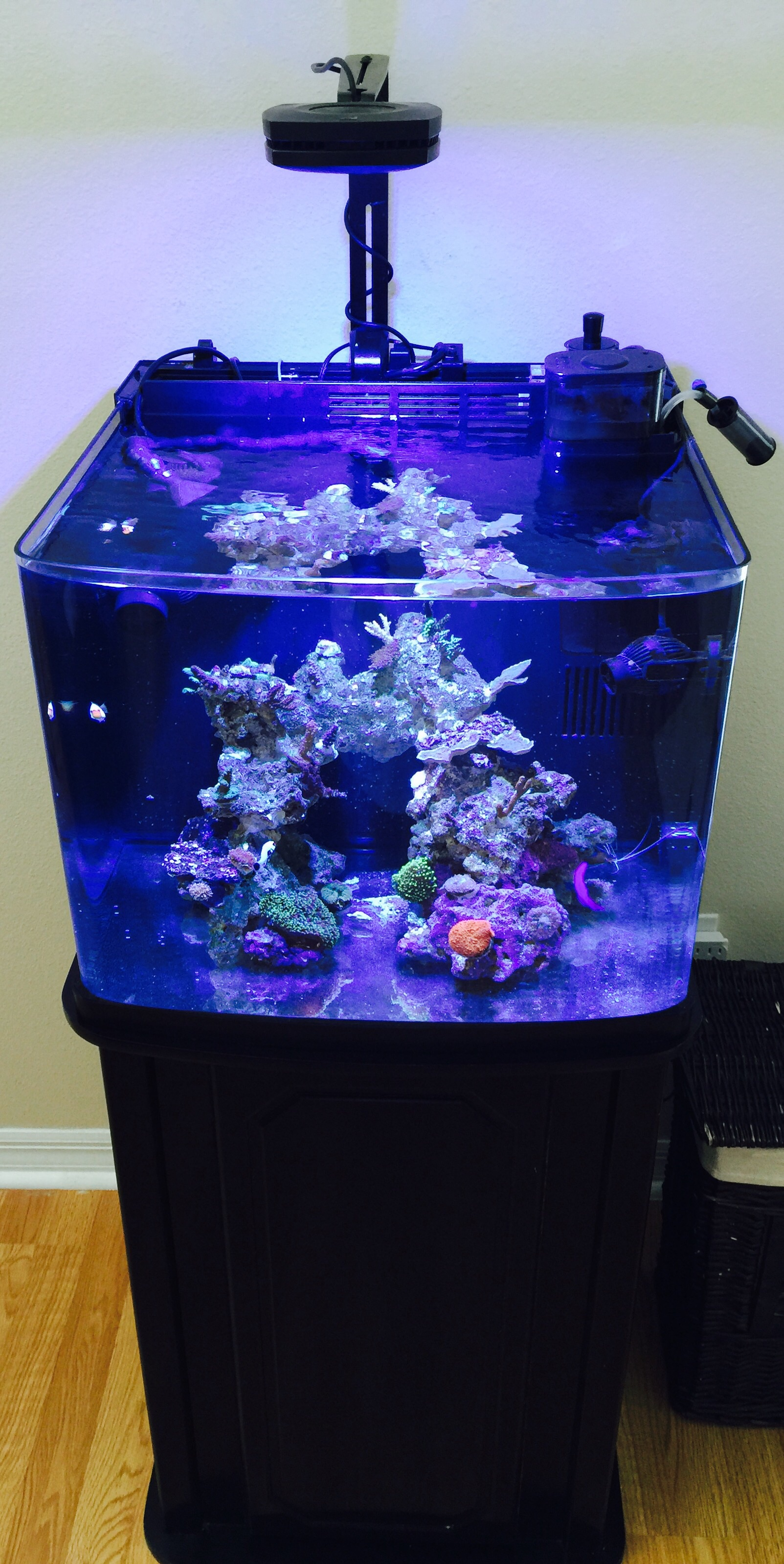 image.jpg ... & Coralife BioCube 29 - Lighting makeover | REEF2REEF Saltwater and ...