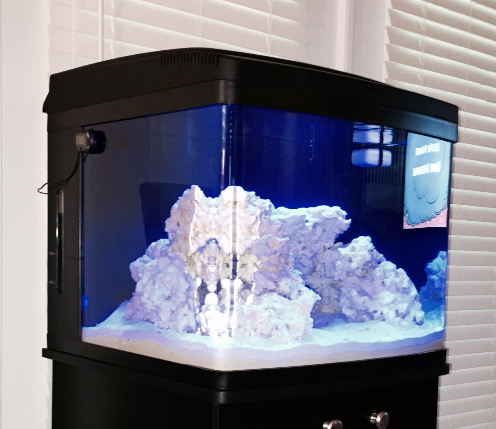 Rare Earth Corals Biocube 29 Tank Build Reef2reef