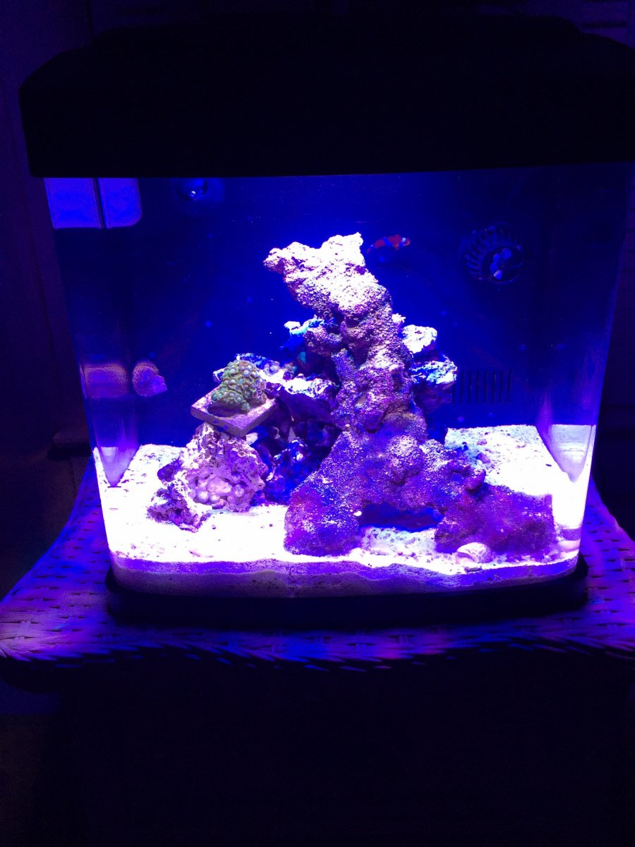 I have a biocube 14 that I put an 14k led light system in and removed all the stock lights  still got to get some more coarls tho ... & Light Settings for 29 Gal Biocube? | REEF2REEF Saltwater and Reef ...