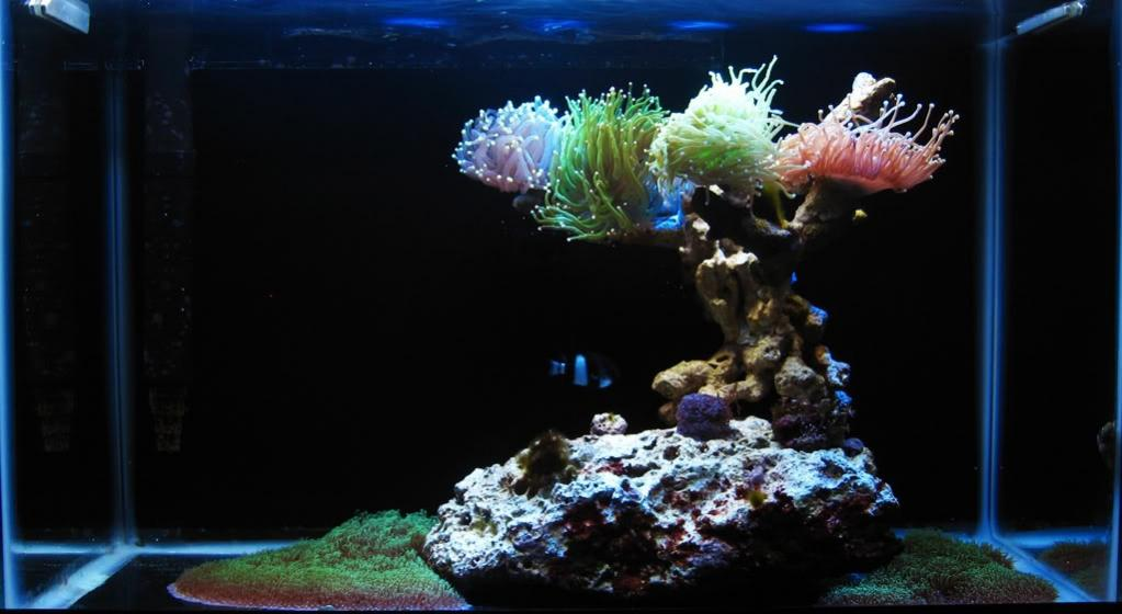Aquascape Ideas Bonsai Reef Aquascape
