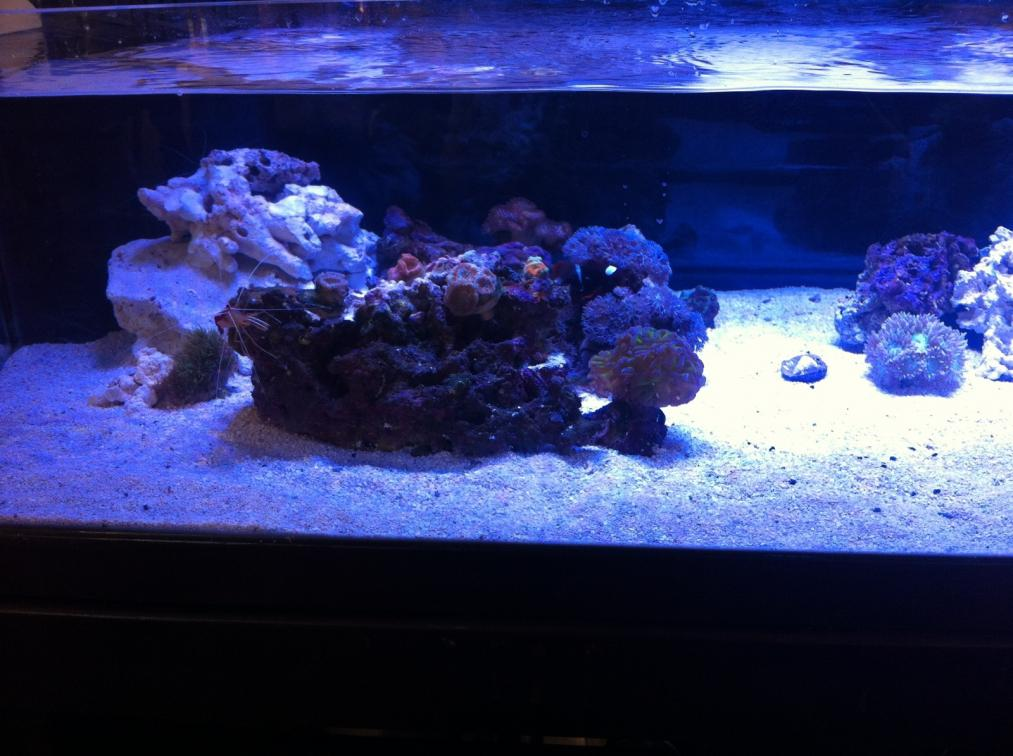 60 Gallon Shallow Rimless Build Reef2reef Saltwater And