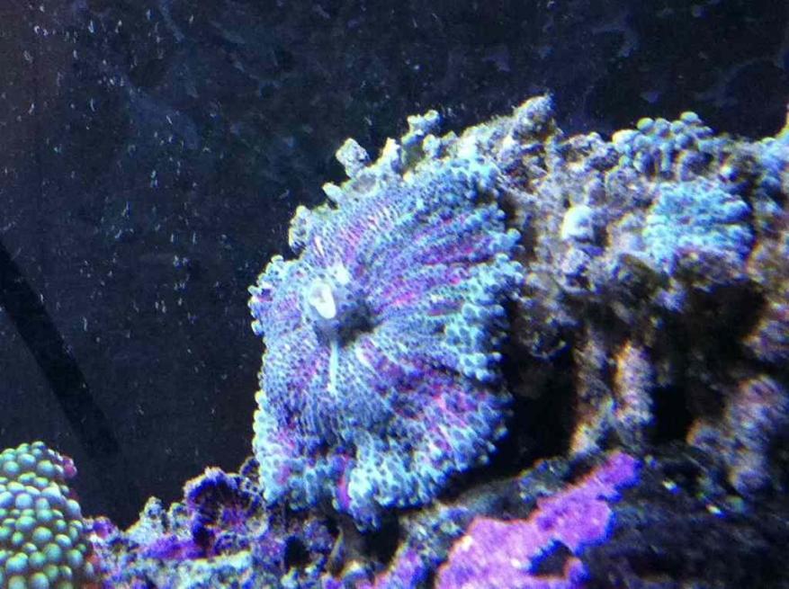 ImageUploadedByReef2Reef Aquarium Forum1366662856.843582.jpg