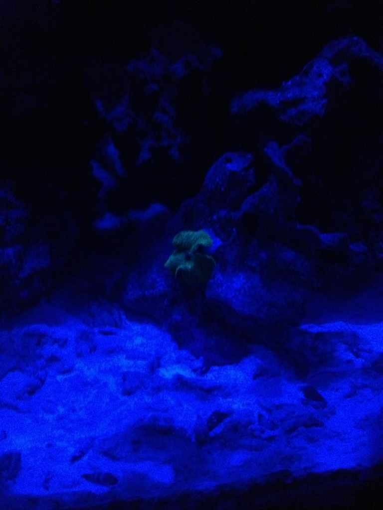 ImageUploadedByReef2Reef Aquarium Forum1367676553.705296.jpg
