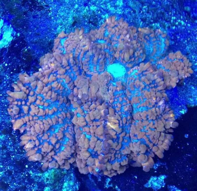 ImageUploadedByReef2Reef Aquarium Forum1373255970.522019.jpg
