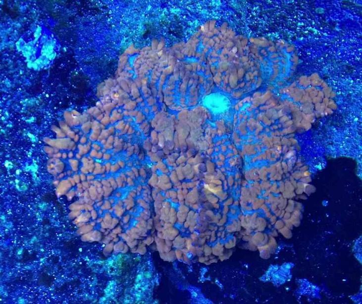ImageUploadedByReef2Reef Aquarium Forum1373255999.552772.jpg