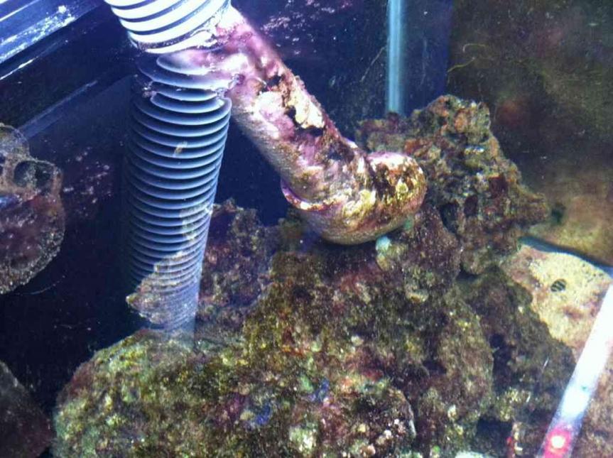My Self Induced Cyanobacterial Bloom Reef2reef Saltwater