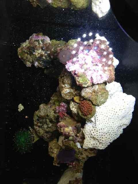 ImageUploadedByReef2Reef Aquarium Forum1373688800.571852.jpg