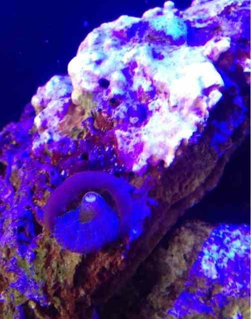 ImageUploadedByReef2Reef Aquarium Forum1373688852.866774.jpg