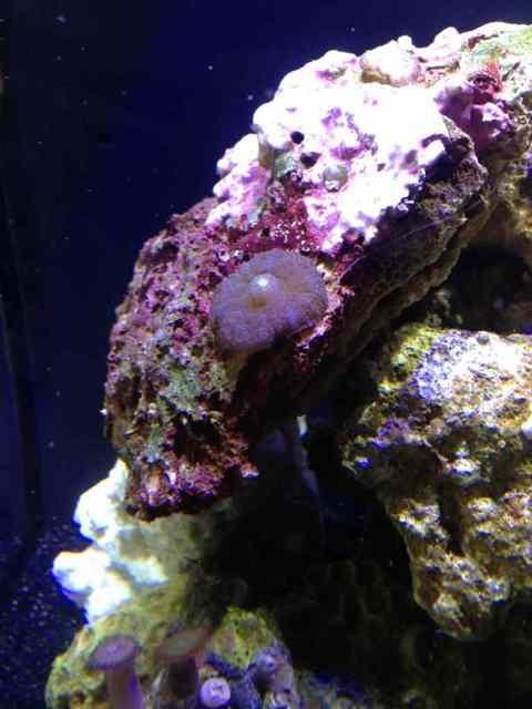 ImageUploadedByReef2Reef Aquarium Forum1373688938.350399.jpg
