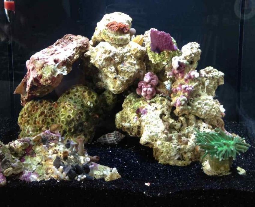 ImageUploadedByReef2Reef Aquarium Forum1373689351.300466.jpg