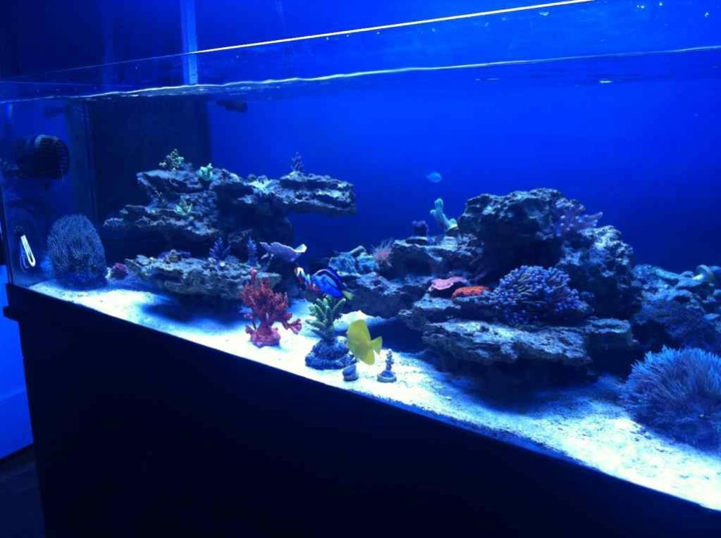 Mikes 80 gallon shallow rimless tank reef2reef for Rimless fish tank