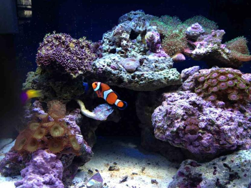 how to get rid of nitrates in saltwater aquarium