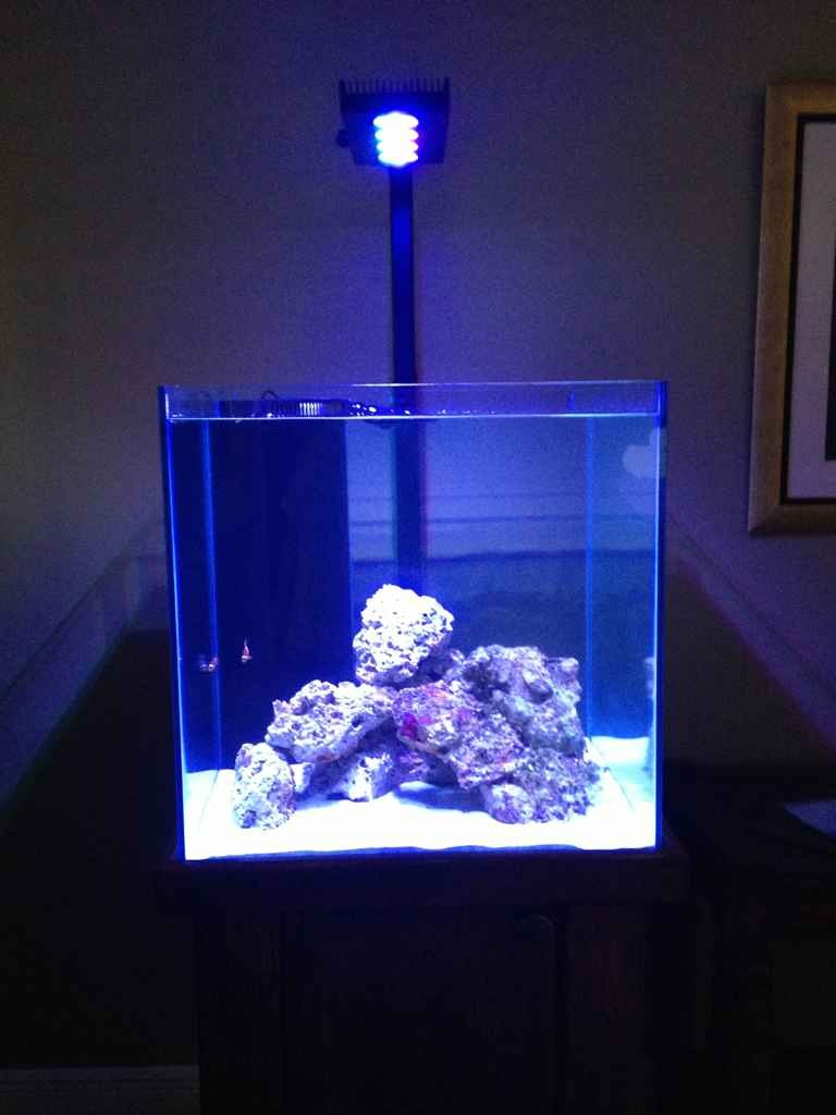 60 gallon cube lighting reef2reef saltwater and reef for Aquarium cube