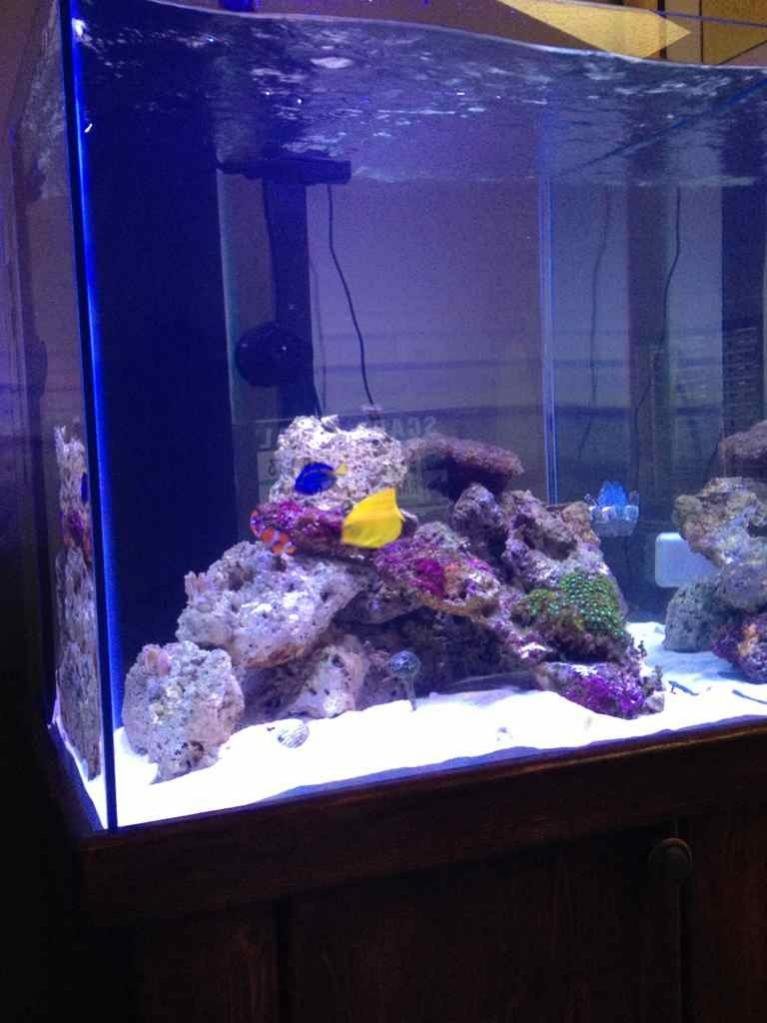 Saltwater aquarium forum monthly featured nano reef for Cube saltwater fish tank