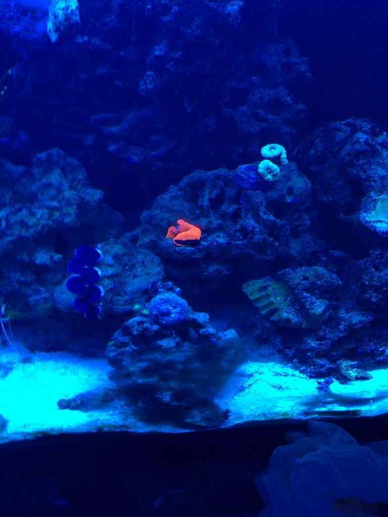 ImageUploadedByReef2Reef Aquarium Forum1376336740.442245.jpg