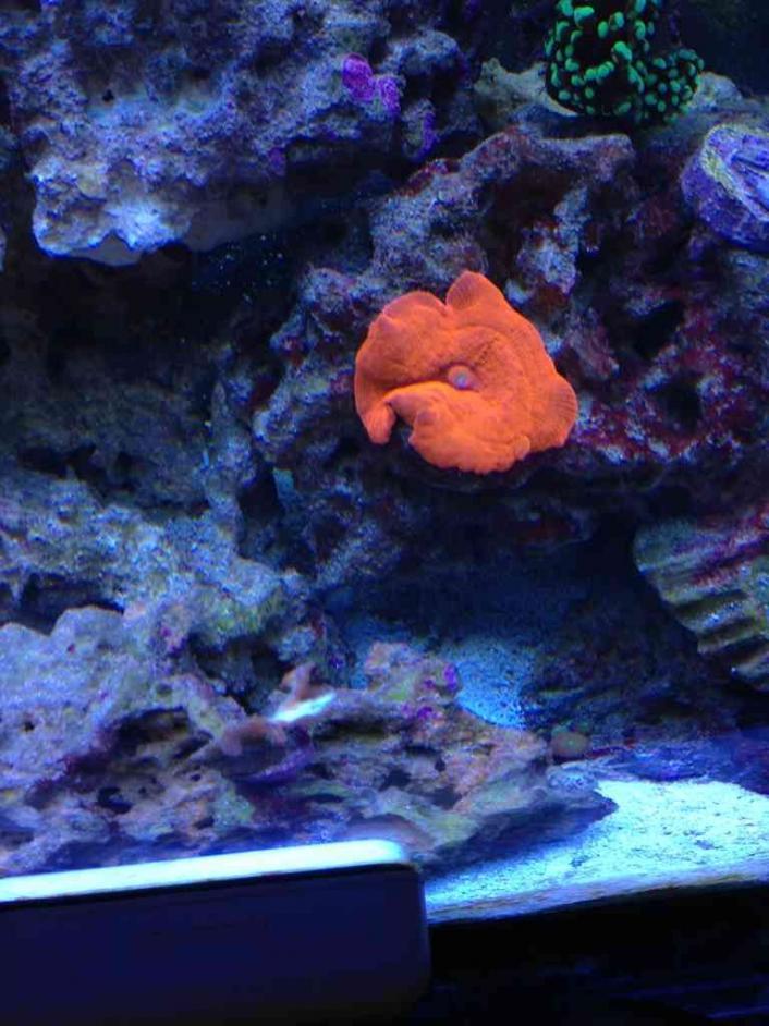 ImageUploadedByReef2Reef Aquarium Forum1376675236.622348.jpg