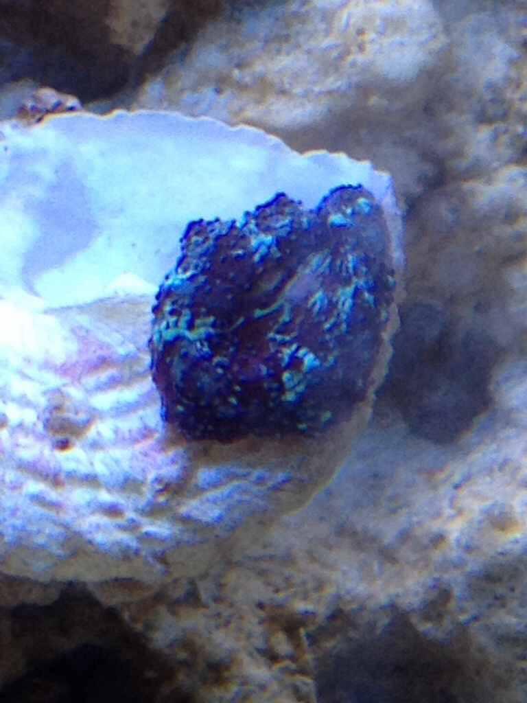ImageUploadedByReef2Reef Aquarium Forum1379163567.387403.jpg
