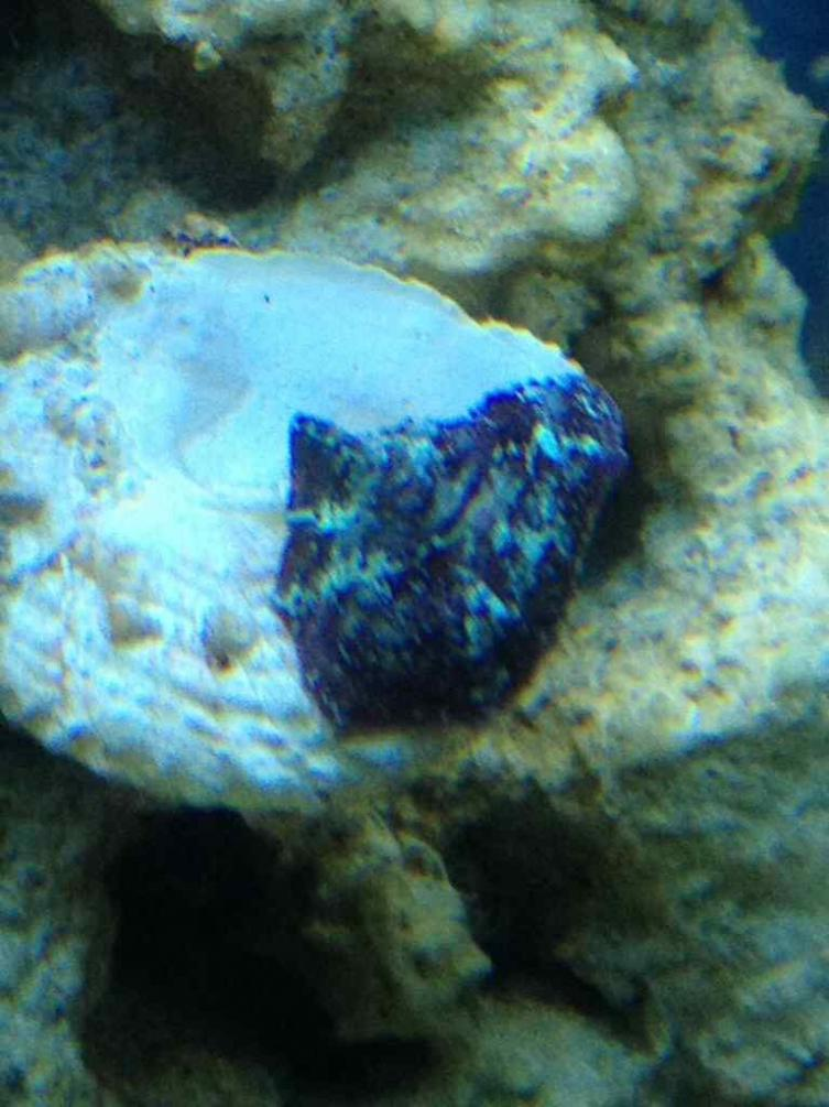 ImageUploadedByReef2Reef Aquarium Forum1379370607.423389.jpg
