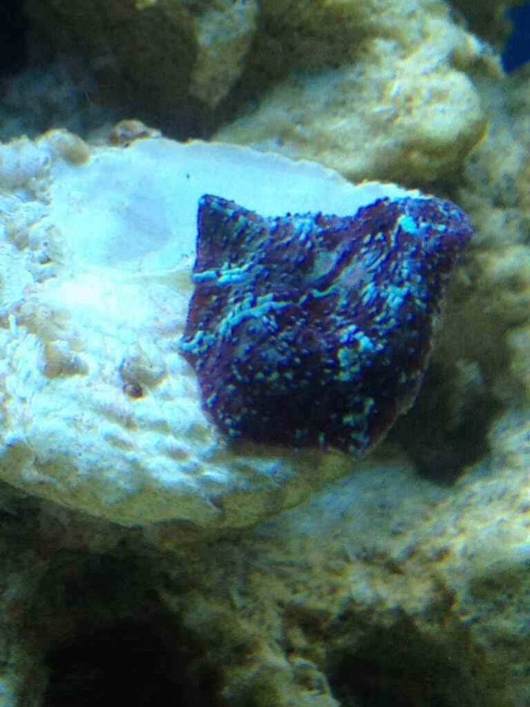 ImageUploadedByReef2Reef Aquarium Forum1379370617.994774.jpg