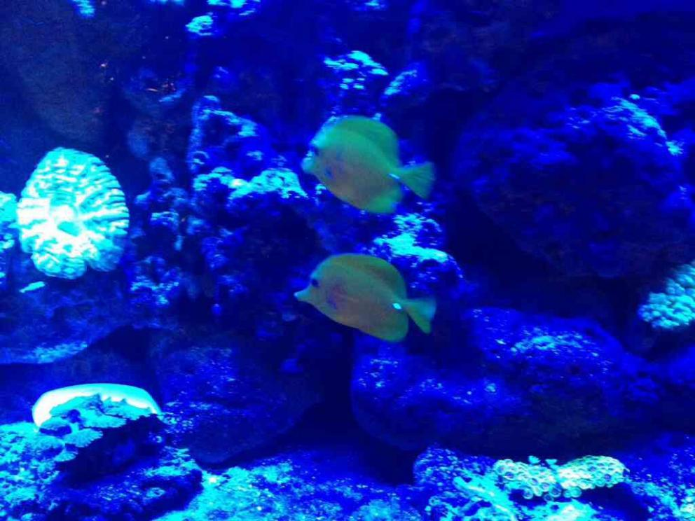 Whats A Good Schooling Fish Reef2reef Saltwater And Reef