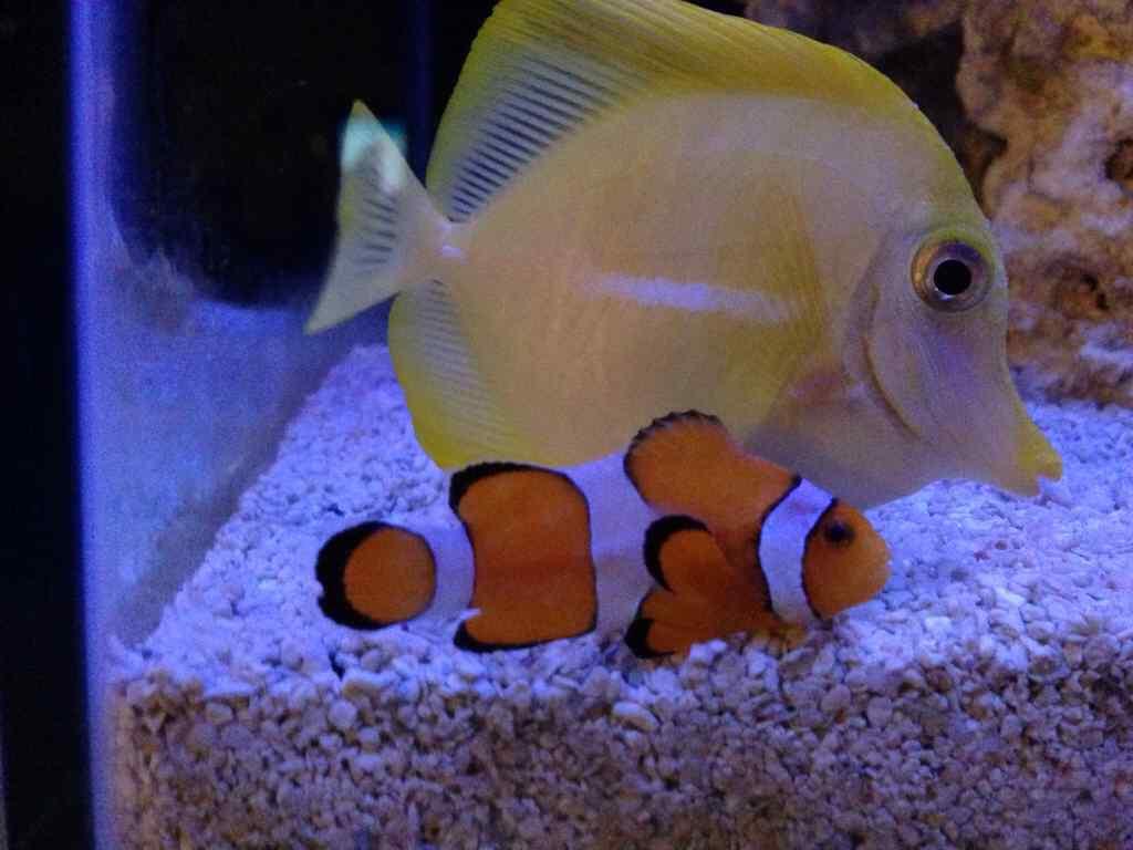 Freshwater aquarium fish are dying - Imageuploadedbyreef2reef1392356236 548918 Jpg