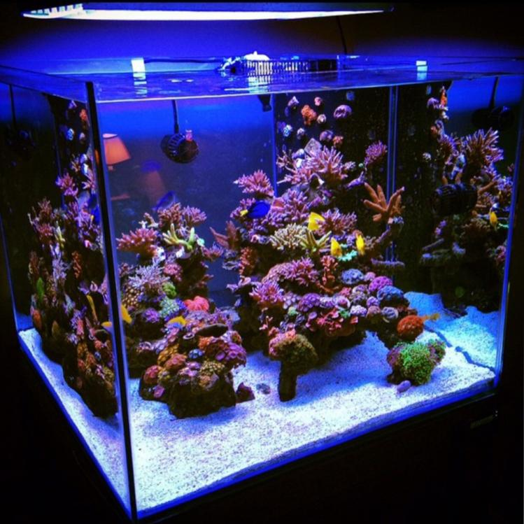 Top Ten Aquariums Of All Time Nominate Now Page 13