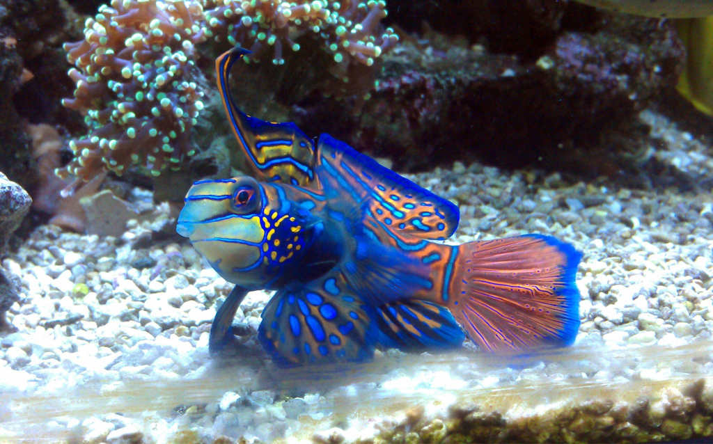 Coolest Reef Safe Fish Page 3 Reef2reef Saltwater And