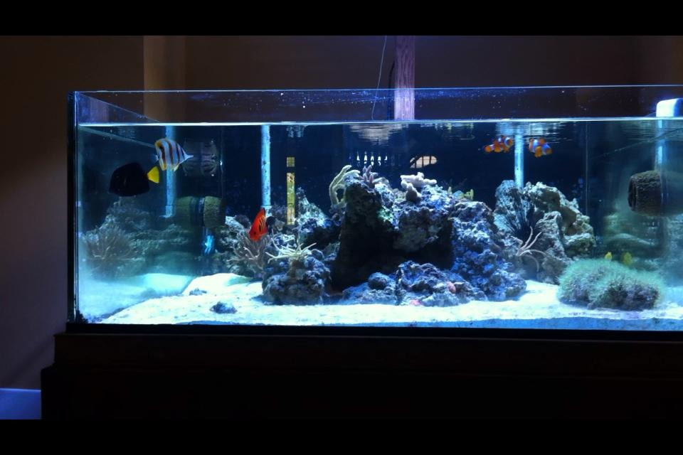 Pros vs cons rimless aquariums vs traditional braced for Rimless fish tank