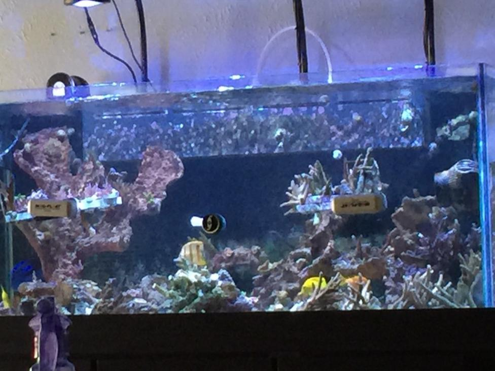 Minimalist Aquascaping Page 3 REEF2REEF Saltwater and Reef ...
