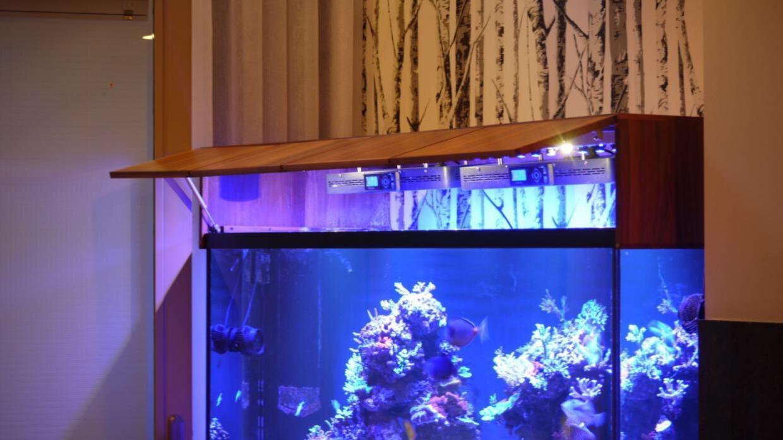 ImageUploadedByTapatalk1420914719.699795.jpg & DIY Canopy | REEF2REEF Saltwater and Reef Aquarium Forum