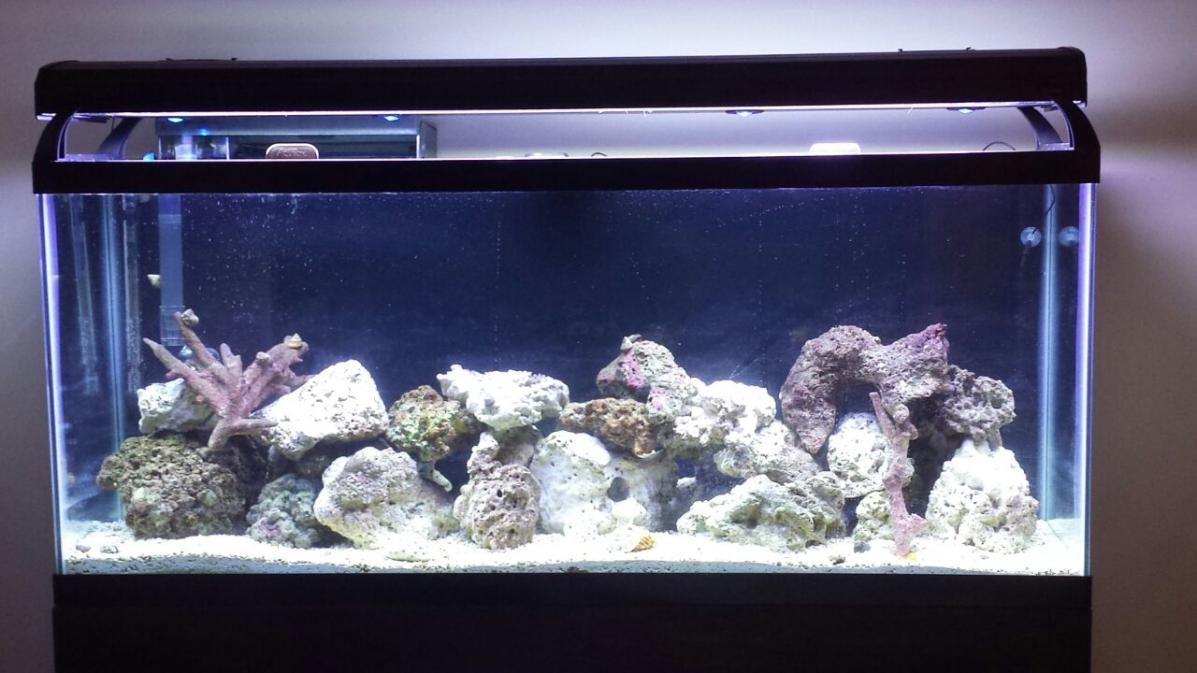 Is This Enough Live Rock For 55 Gallon Reef Tank?