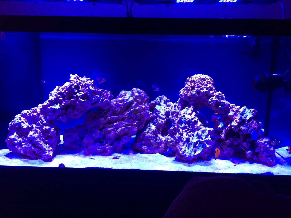 220 Gallons Of Pure Awesome Reef2reef Saltwater And Reef