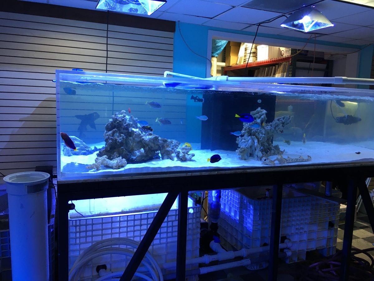 Long Shallow Aquarium 1000 Aquarium Ideas