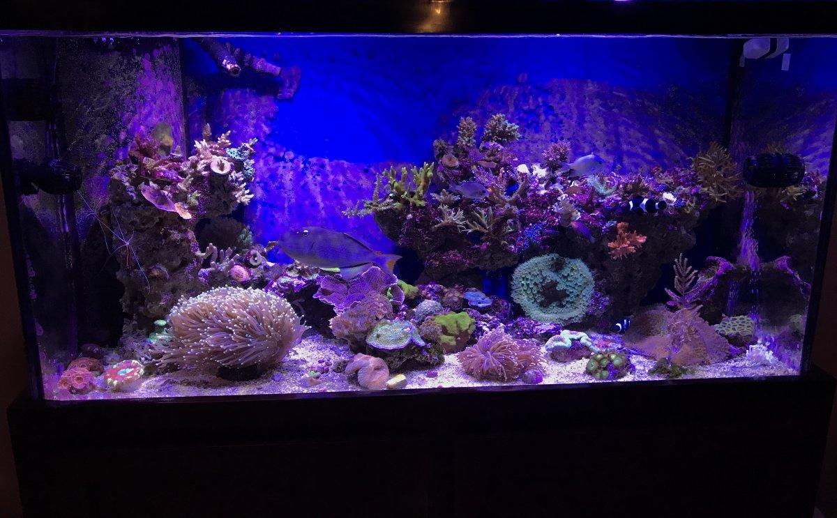 Marineland 60 gallon cube aquarium 1000 aquarium ideas for Aquarium cuve
