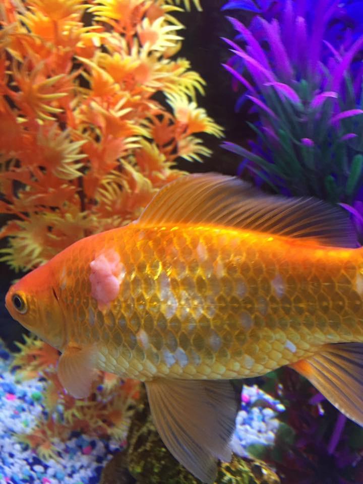 Anyone Know Freshwater Fish Disease Reef2reef Saltwater And Reef