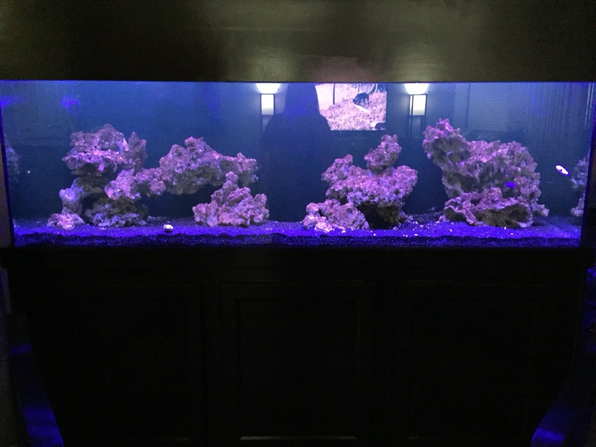 Show Us Your 120 Gallon Aquascapes | Page 3 | REEF2REEF ...