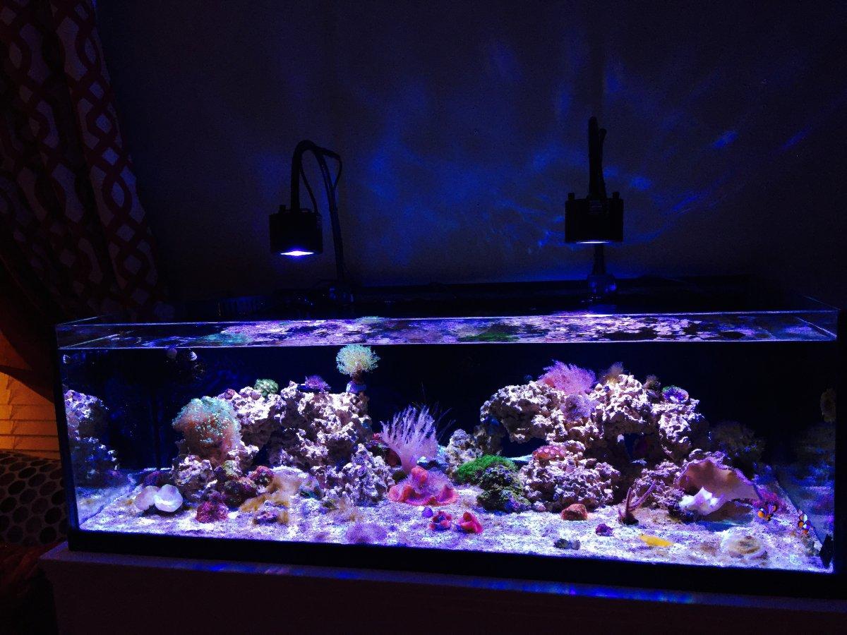 Oceanic reef ready rimless aquarium 1000 aquarium ideas for Oceanic fish tanks