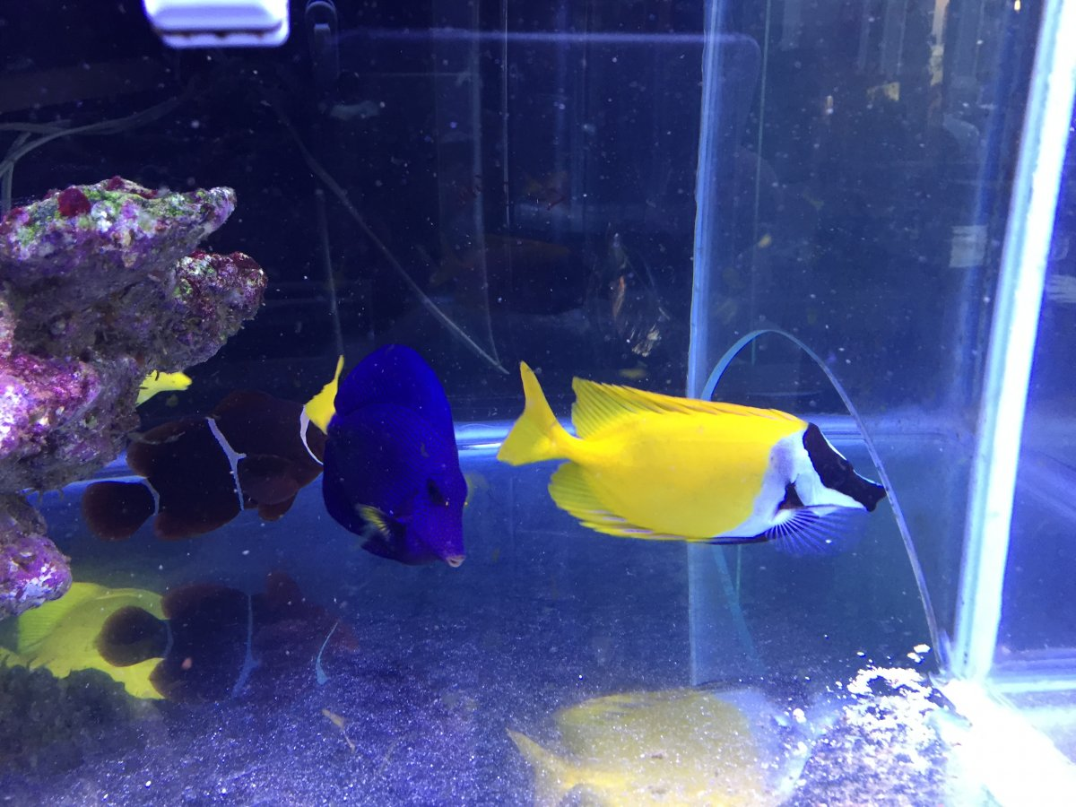 Fish for sale reef2reef saltwater and reef aquarium forum for Reef fish for sale