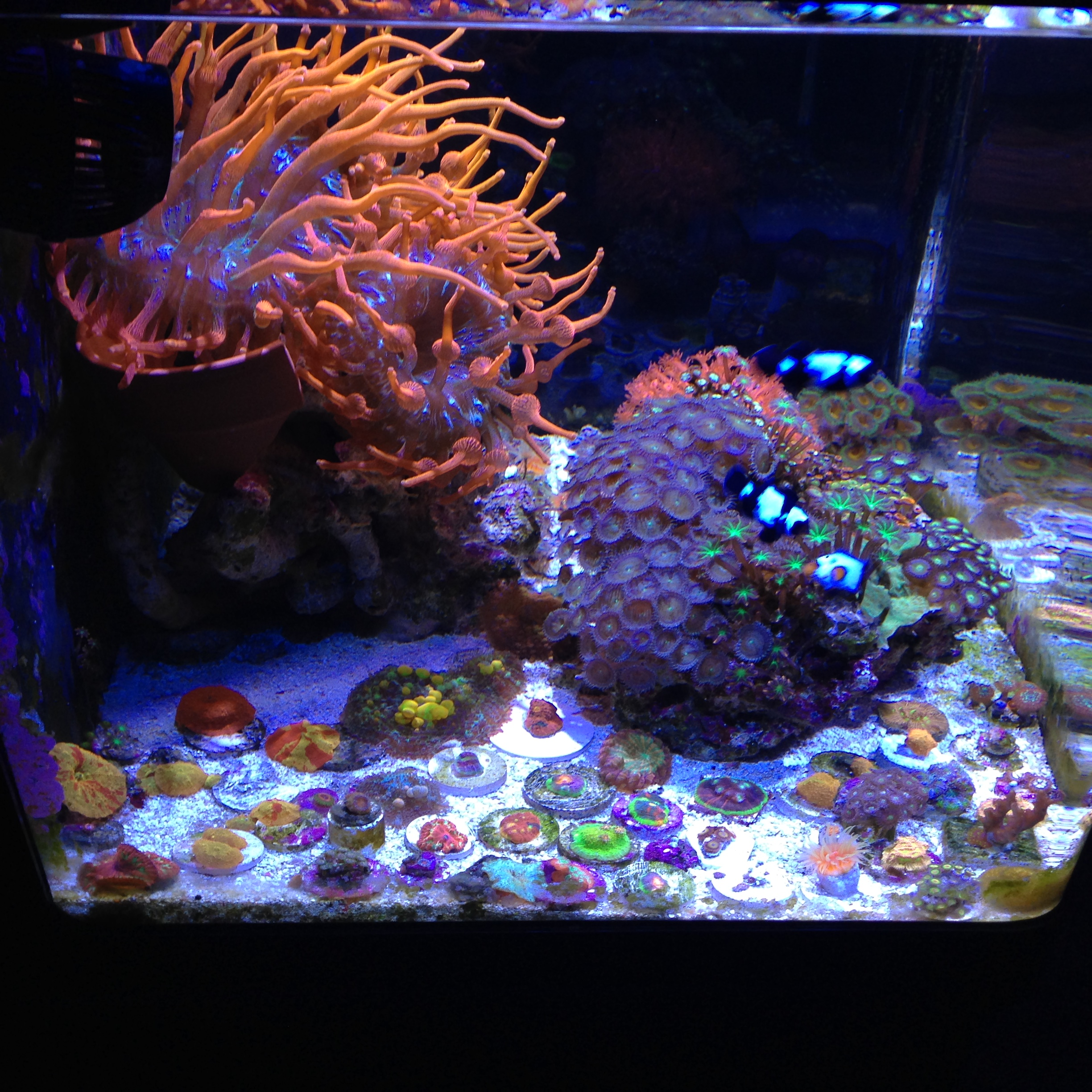 Show Your Nano Aquarium Here Page 53 Reef2reef