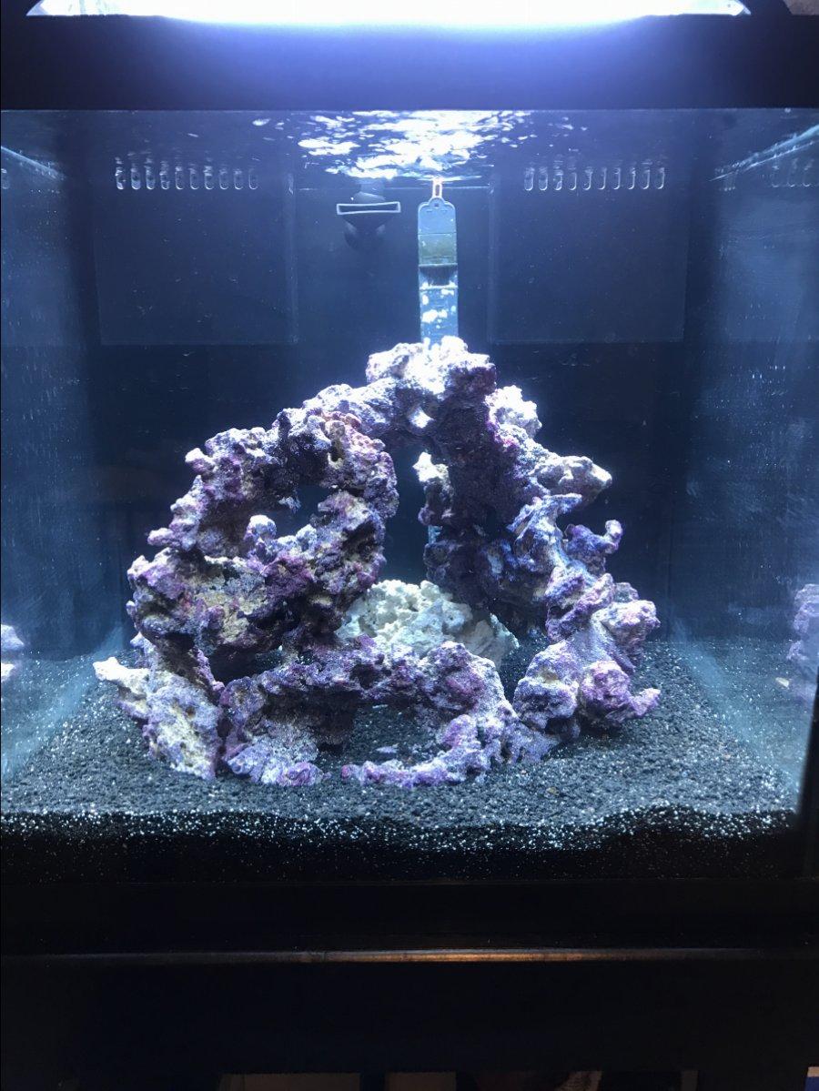 Black Substrate Reef2reef Saltwater And Reef Aquarium Forum